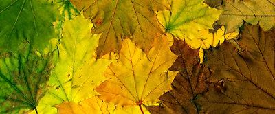 Autumnal Montage